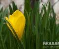Отбелязваме Еньовден – Деня на билките и слънцето