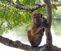Иран праща маймуна в Космоса до месец