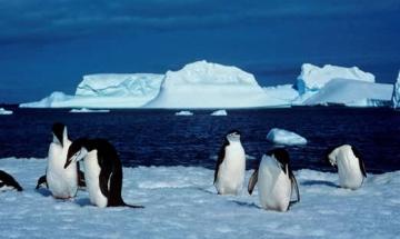 """39 есета се включиха в конкурса """"Какво знам за Антарктида"""""""