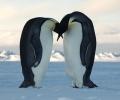 Пускат марки, посветени на ХХ Юбилейна антарктическа експедиция