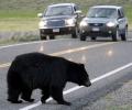 Катастрофа между кола и мечка