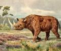 В Урал откриха носорог на милиони години