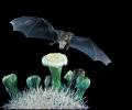 """""""Приказки от музея"""" разказват в Националния природонаучен музей"""