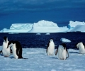 Ще търсим злато на Антарктида