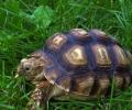 Задържаха бракониери на защитен вид костенурки