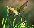 Птиците на България и Тайван се събират в изложба