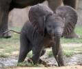 Зоопаркът във Варна събира елхички за храна на животните