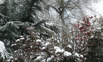 """Снеговалежът докара """"дървена"""" ваканция"""
